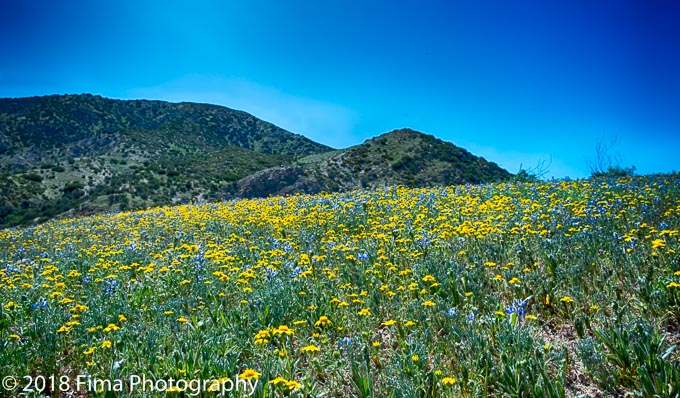 Wildflowers are everywhere