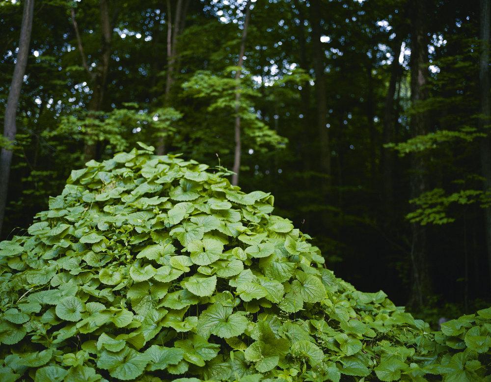 mound_11x14.jpg