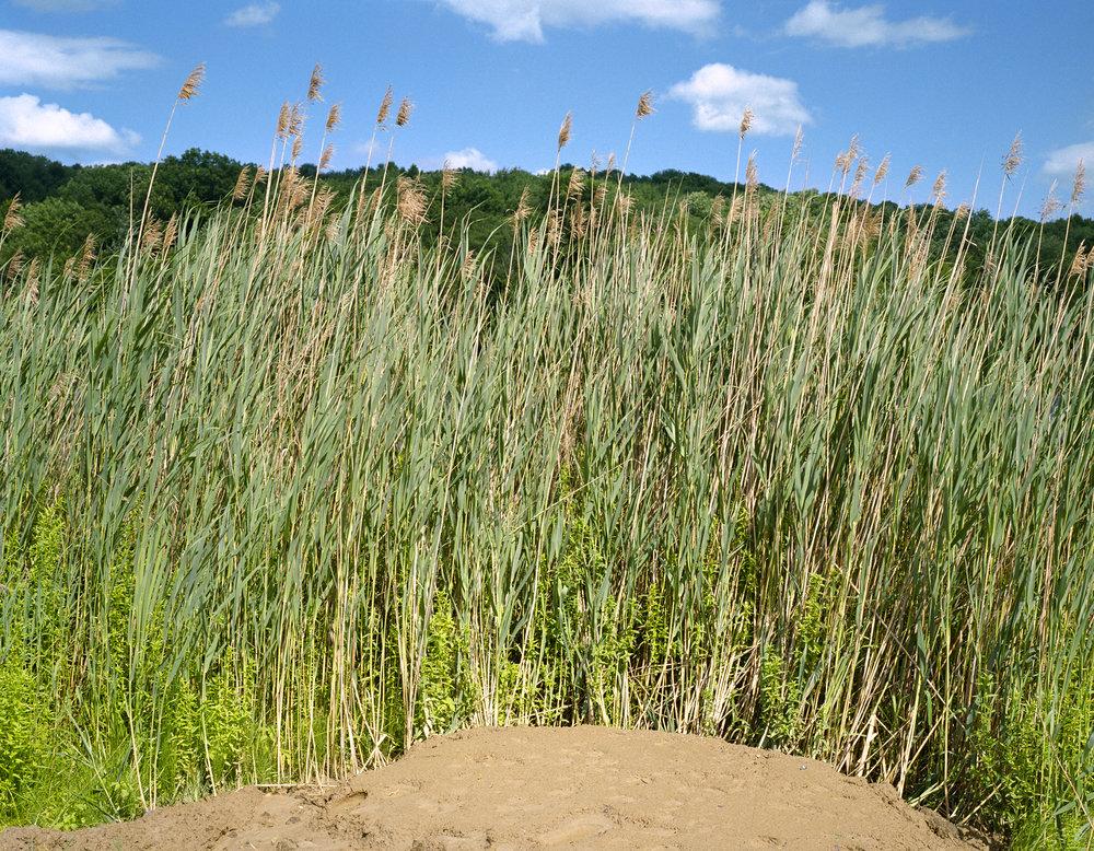 grass_sky_11x14.jpg