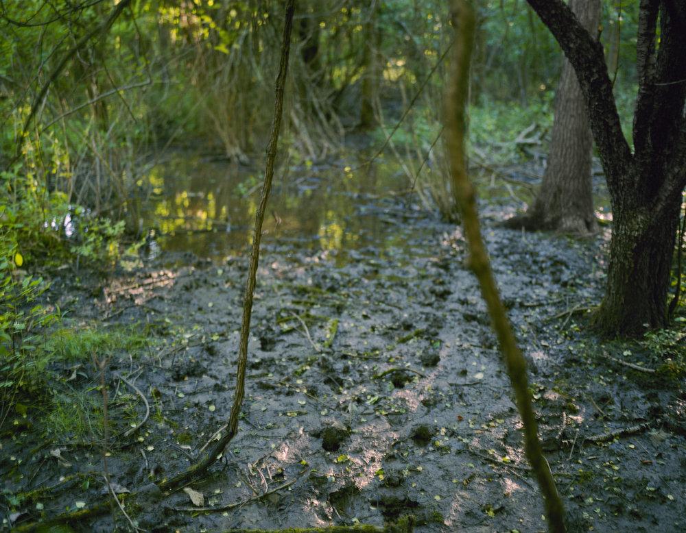 swamp_11x14_adj.jpg