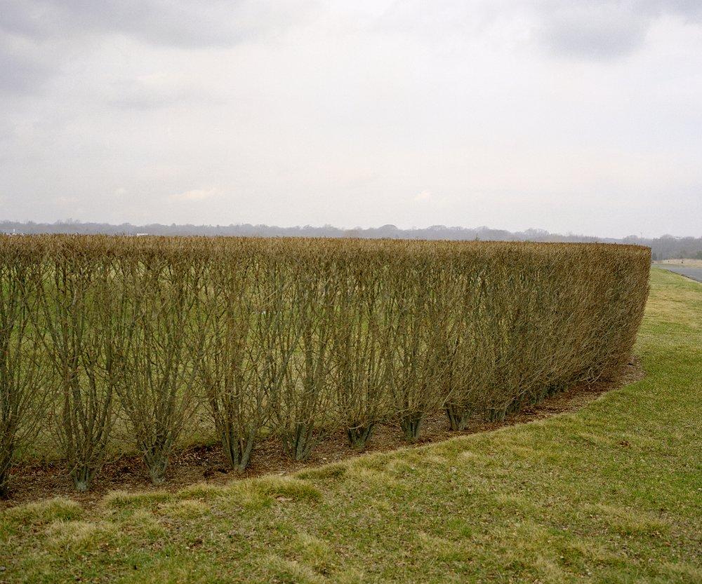 hedge_FINAL.jpg