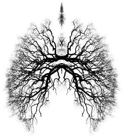 breathe_tree_lungs.jpg