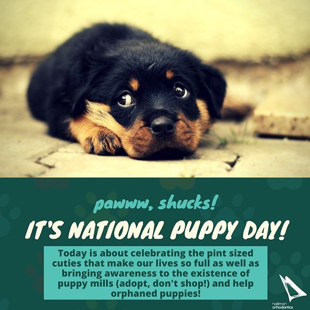 It's National Puppy Day! Learn more about this awesome holiday here! http://www.nationalpuppyday.com #nationalpuppyday #puppies #adoptdontshop #puppymills #hallmanortho #hallmanorthodontics #hallmanorthodonticsmile