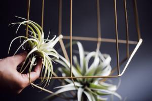 shawna_diy_hanging_plants-9-L