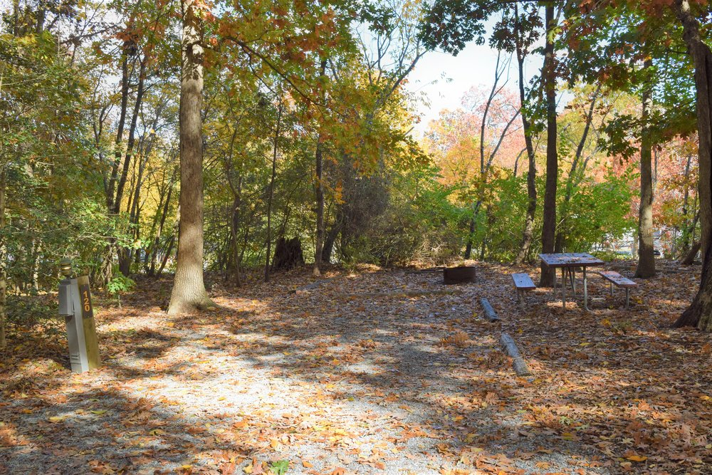 Parking Area of Tent Site in the Woods at Cherry Hill Park