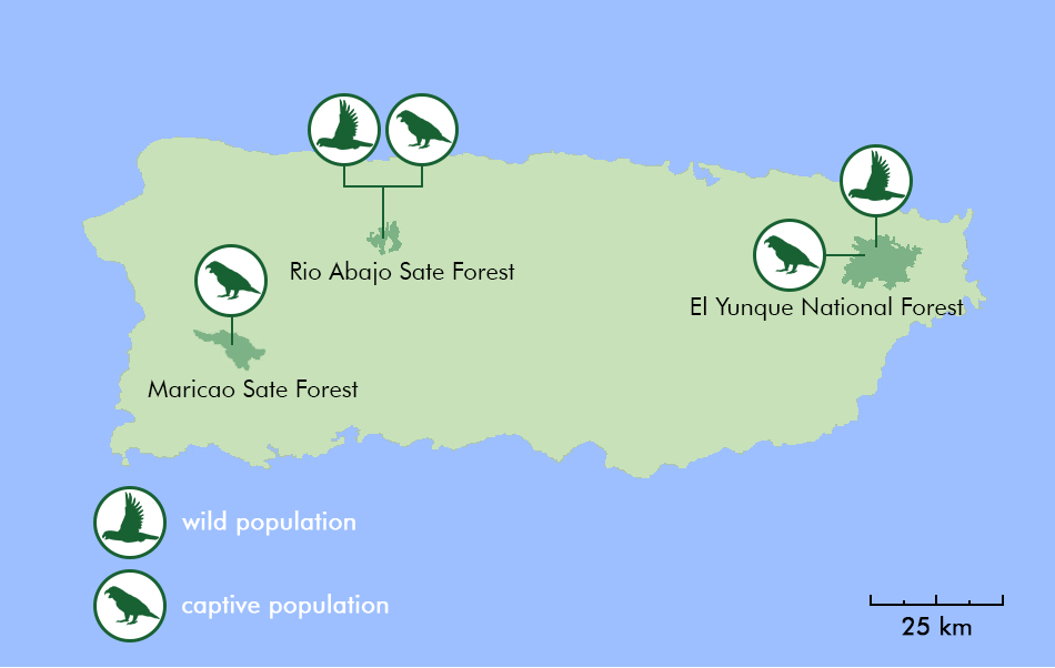 A map of the five Puerto Rican parrot populations (wild and captive) that existed at the begining of 2017 before the arrival of hurricane Maria.