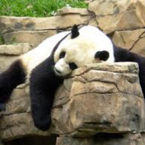cfb panda.jpg