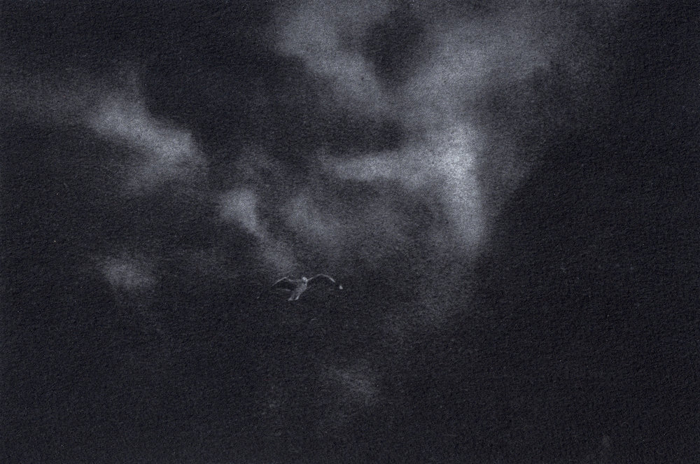 Seagull_CsabaFarkas.jpg