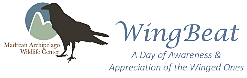 wingbeat logo.PNG