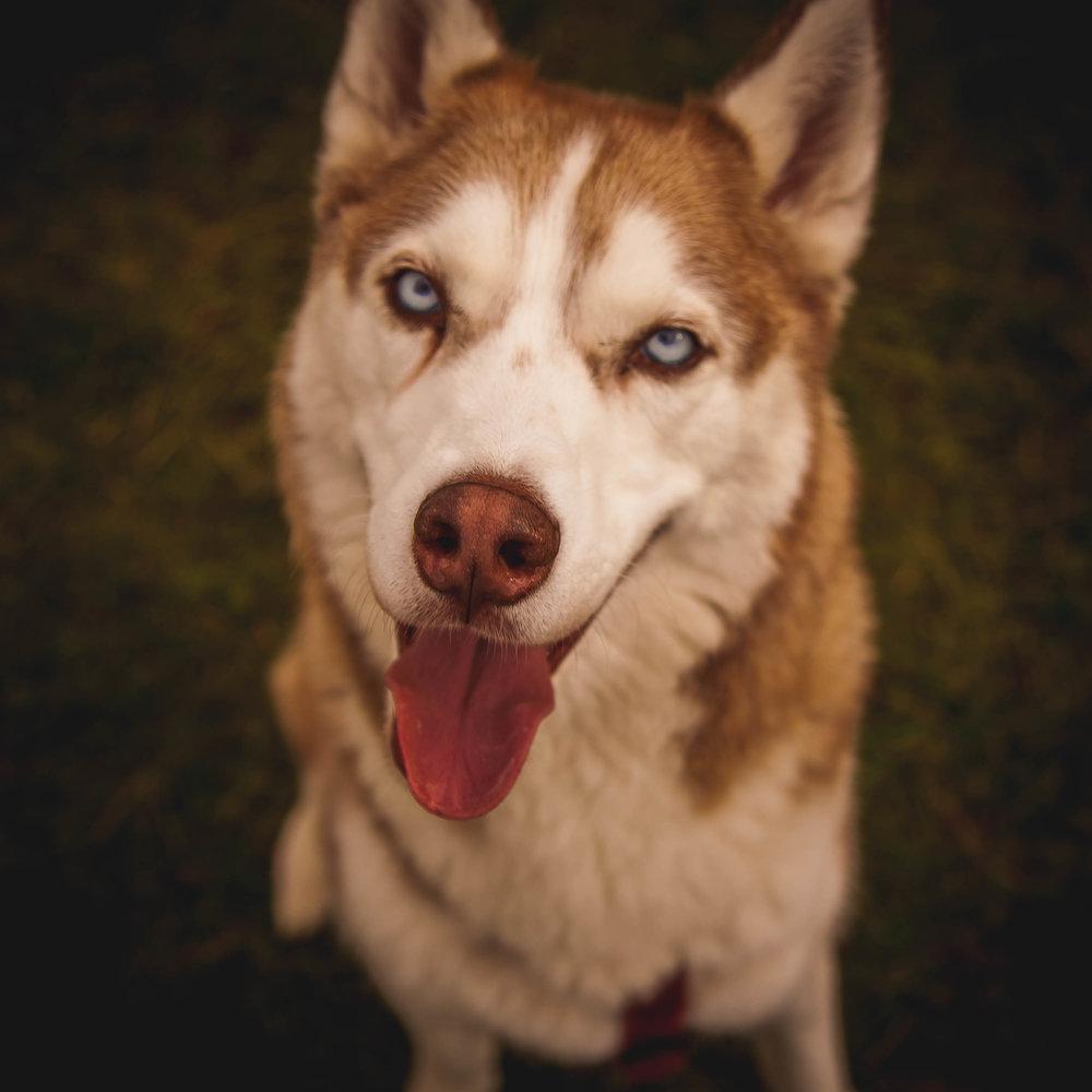 dogPORTRAITS -