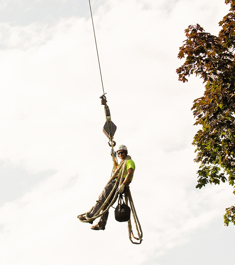 Our Promise - It's not just about providing tree care—it's about how we perform these services. We pride ourselves on positive attitudes and professional interaction with all our clients and anyone we come in contact with on the job.