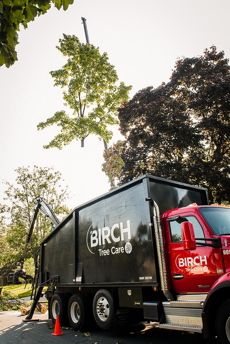 birch tree care tree removal truck.jpg