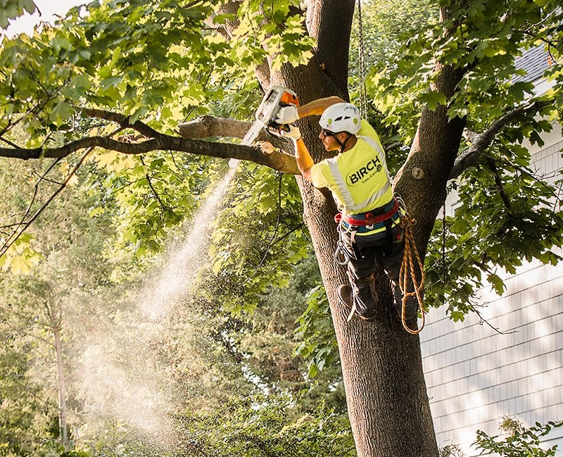 Our History - In short, Birch Tree Care is a commercial and residential tree care company. But how did we get here?
