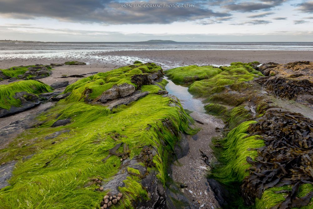 Seagrass leading out to Lambay