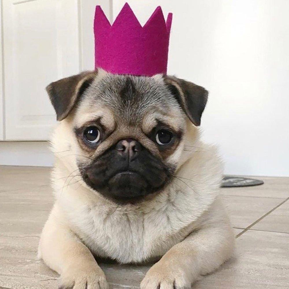 Modern Beast Crown