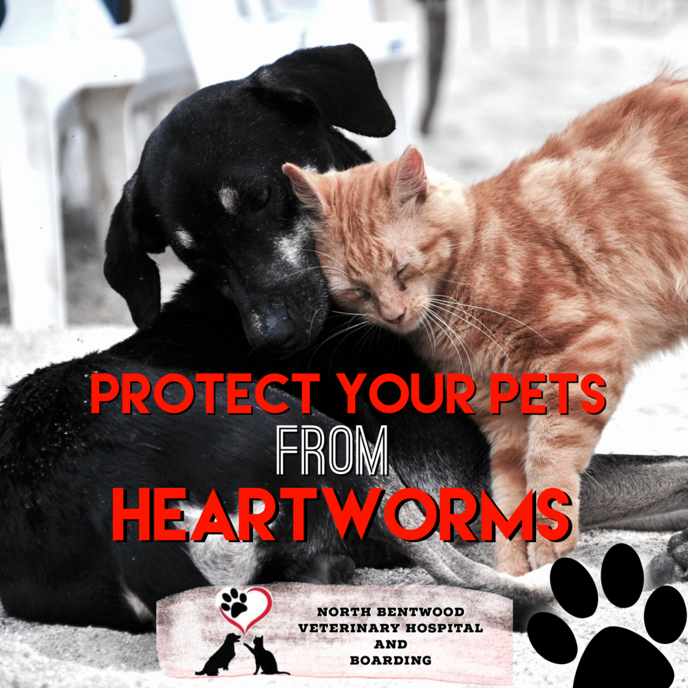 protect your pet against heartworms
