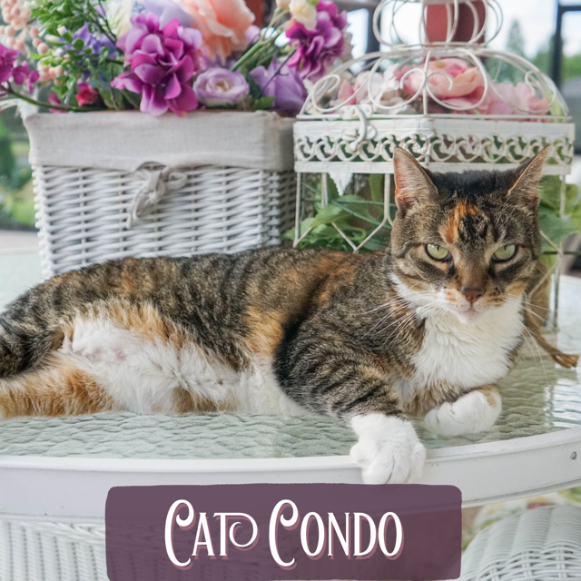 Come check out North Bentwood Veterinary Hospital and Boarding Cat Condos