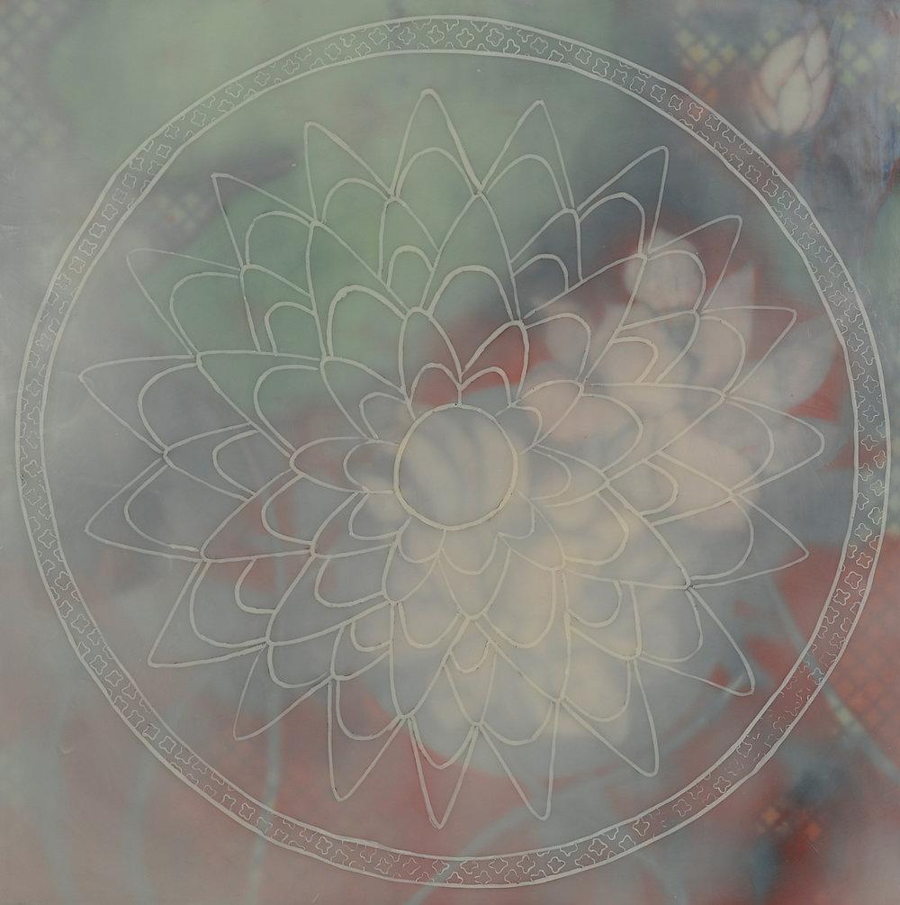 Lotus #7