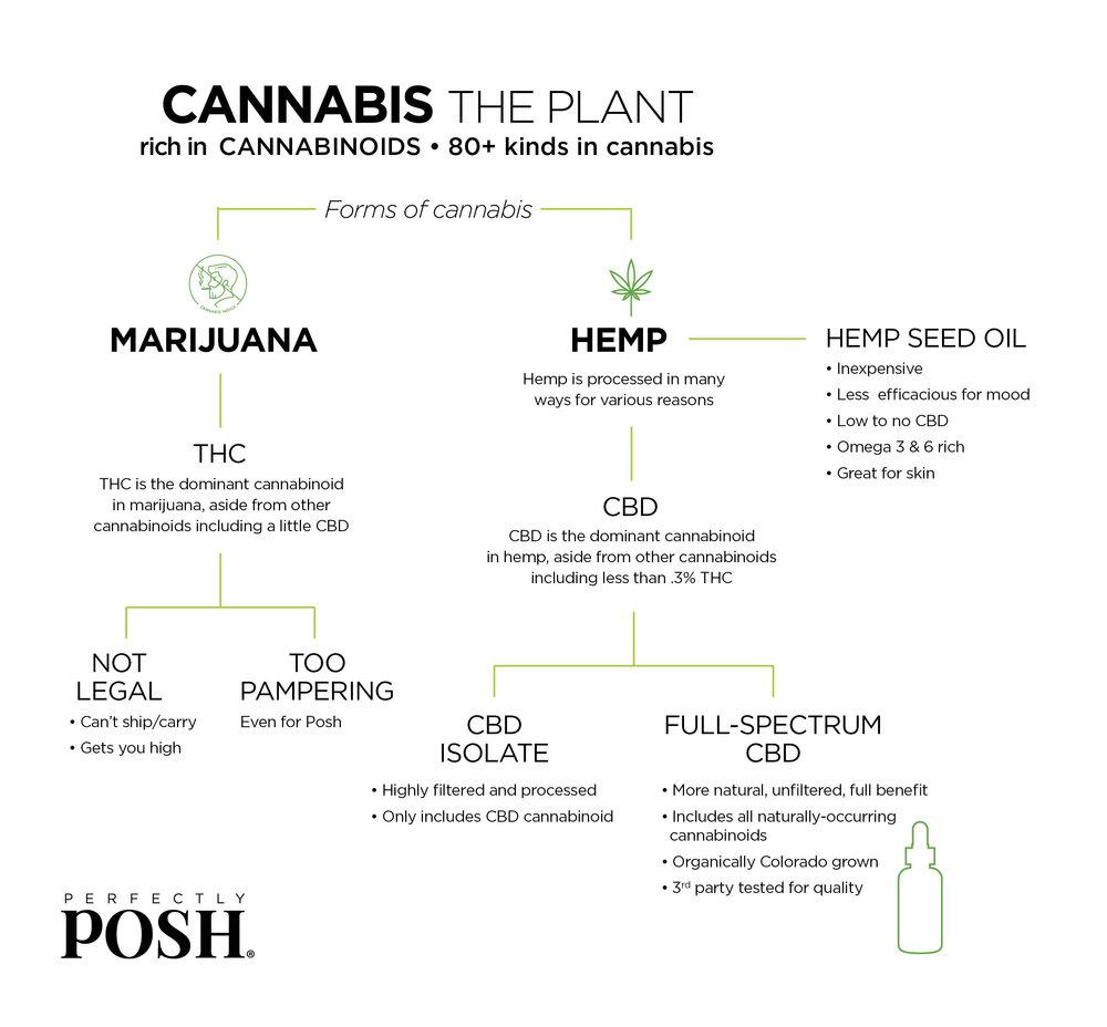 Perfectly Posh CBD oil chart, what is the difference between marijuana and hemp, hemp seed oil vs. CBD, full-spectrum CBD vs CBD isolate, CBD vs. THC