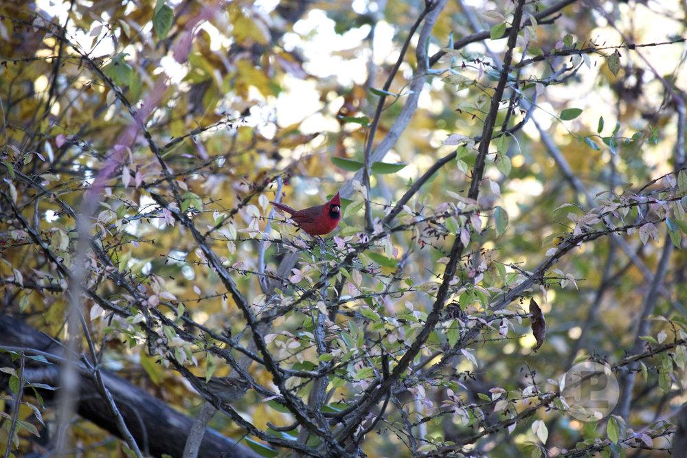 CardinalPreserve_103017.jpg