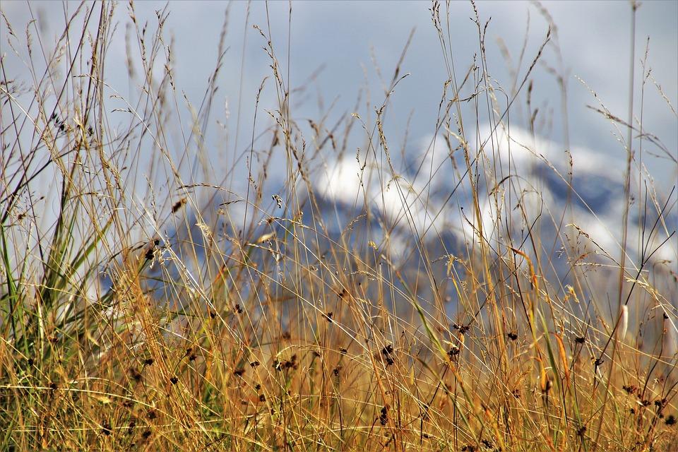 dry-grass-3661331_960_720.jpg