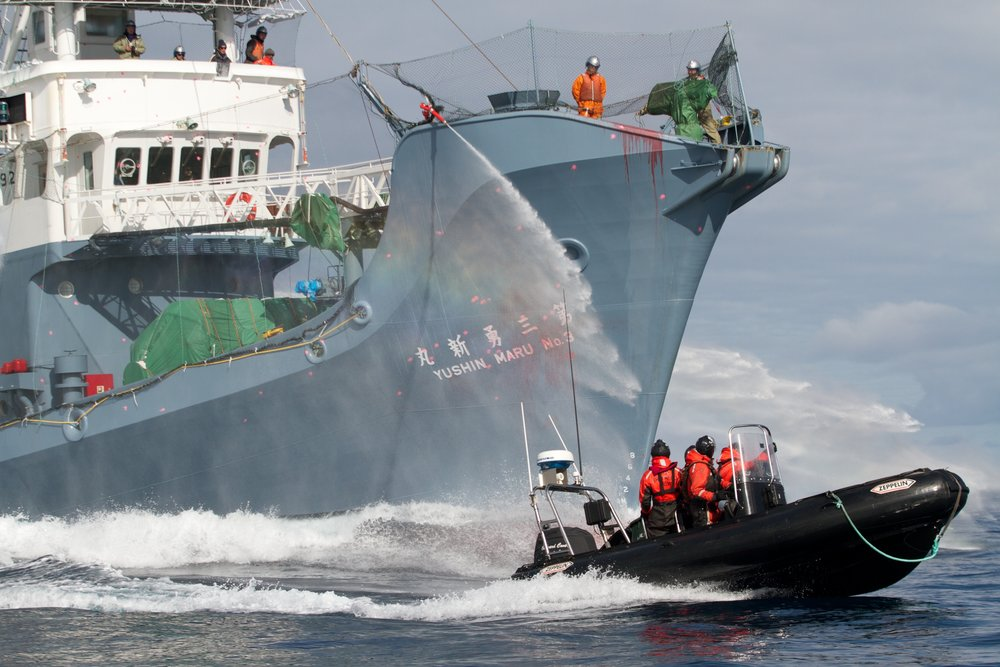 110204_The_paint_splattered_bow_represents_the_whalers_bloody_actions_in_the_Southern_Ocean_GS0262.jpg