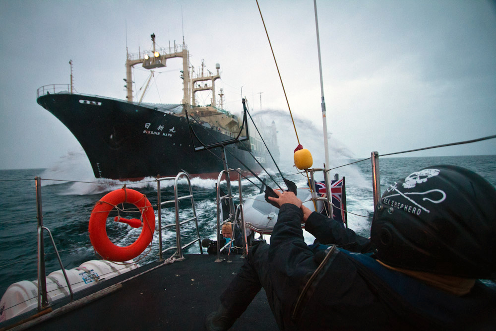 110209_SSCS_crewmember_readies_the_slingshot_to_unleash_red_paint_symbolic_of_blood_on_the_factory_ship_SA7480.jpg