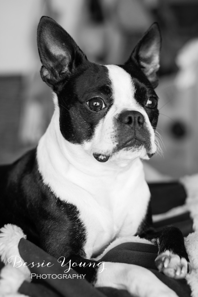 Pet Portrait Photographer Bessie Young