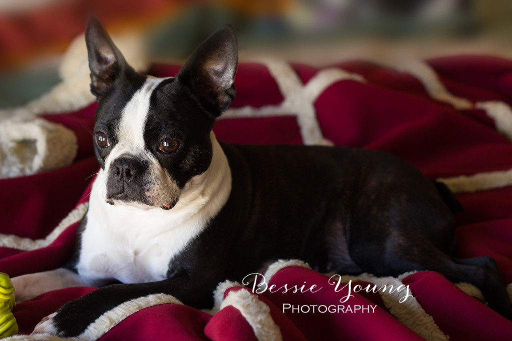 Pet Portraits Fresno