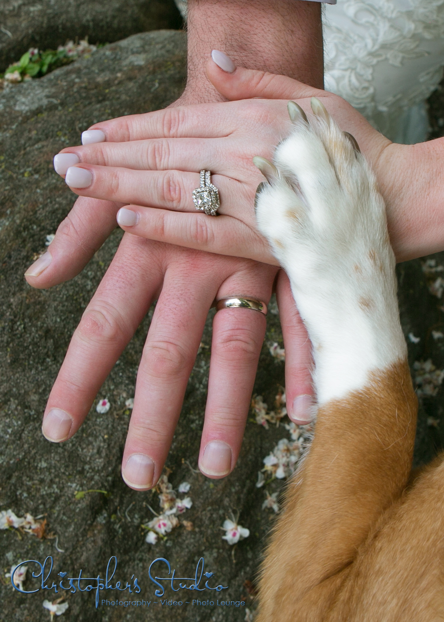 Doggy-paw-engagement