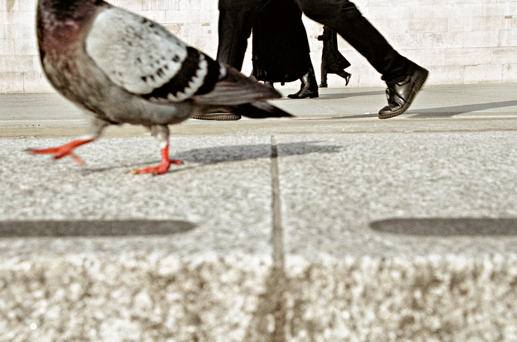 """ I had been bent over with my bum in the air for about half an hour when a rather confident pigeon walked past. I instinctively shot this frame but as I was doing it I noticed something had happened with the human legs as well."" For more background from Matt clickthrough    Copyright: Matt Stuart 2016"