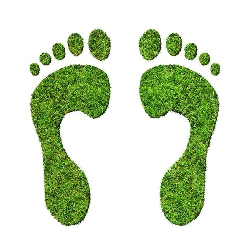 what does your carbon footprint look like? -