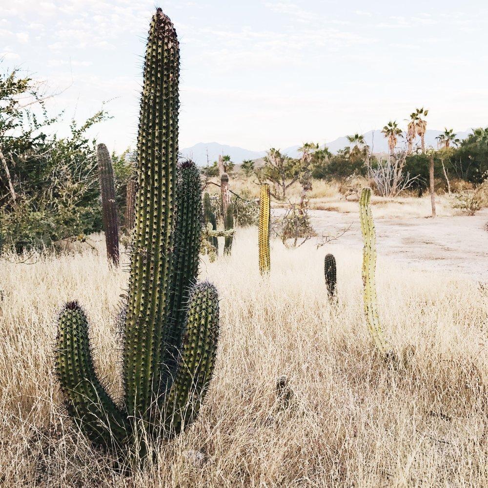 Home-fine-art-mexican-mexico-karina-mora-prints-5.JPG