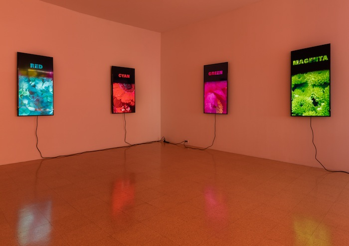 Diana Thater, Colorvision, 2016. Installation view 1301PE.