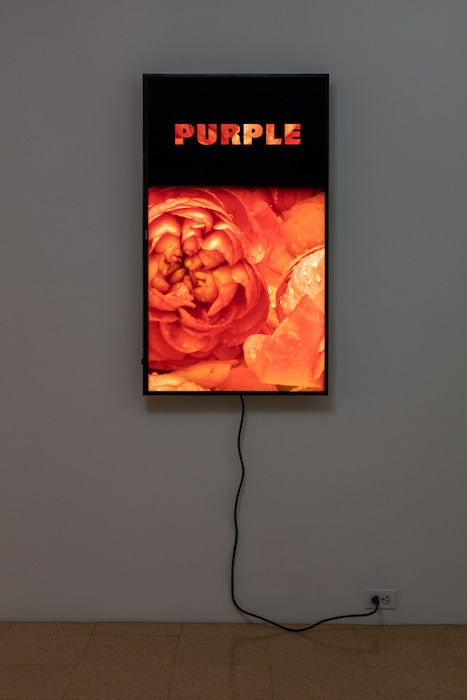 Diana Thater, Colorvision Purple, 2016, (1) monitor, hard drive, endless loop. Installation view 1301PE.