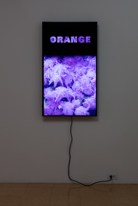Diana Thater, Colorvision Orange, 2016, (1) monitor, hard drive, endless loop. Installation view 1301PE.
