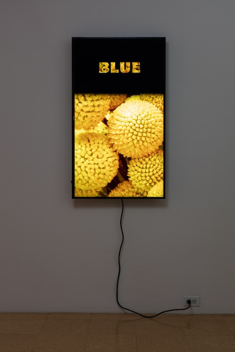 Diana Thater, Colorvision Blue, 2016, (1) monitor, hard drive, endless loop. Installation view 1301PE.