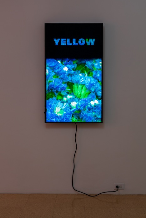 Diana Thater, Colorvision Yellow, 2016, (1) monitor, hard drive, endless loop. Installation view 1301PE.