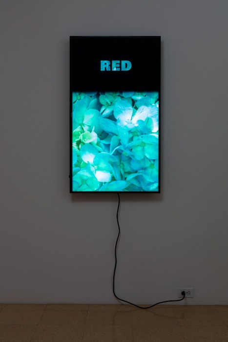 Diana Thater, Colorvision Red, 2016, (1) monitor, hard drive, endless loop. Installation view 1301PE.