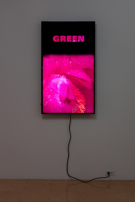 Diana Thater, Colorvision Green, 2016, (1) monitor, hard drive, endless loop. Installation view 1301PE.