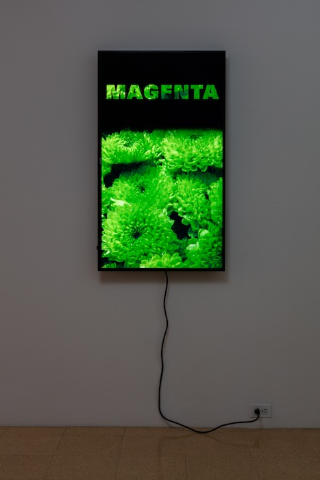 Diana Thater, Colorvision Magenta, 2016, (1) monitor, hard drive, endless loop. Installation view 1301PE.