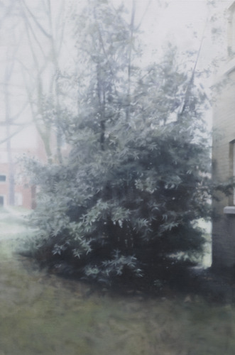 Paul Winstanley, Evergreen in the Grounds, 2010, Oil on linen, 33.07 x 22.05 in., 84 x 56 cm