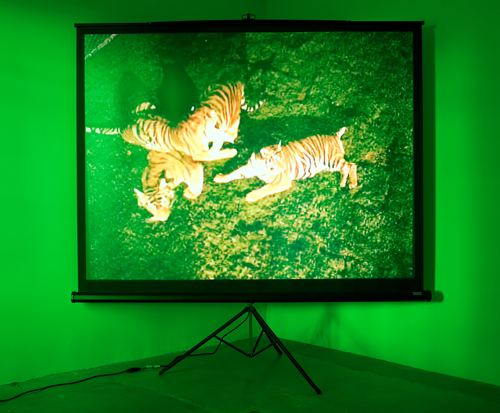 Diana Thater, Perfect Devotion Number Four, 2008, Digital projection