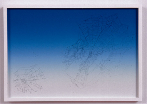 Pae White, Web Sampler #48, 2001, Spider web on Perfect Paper, 40 x 30 in.