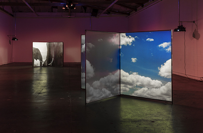 Diana Thater, A Runaway World (background), As Radical As Reality (foreground), 2017. The installation view at The Mistake Room, Los Angeles, 2017. Photo by: Fredrik Nilsen.