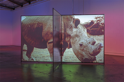 Diana Thater, As Radical as Reality , 2017, Plexiglas, steel, two-channel video projection (color, silent, indefinite duration). Installation view. Photo: Fredrik Nilsen.