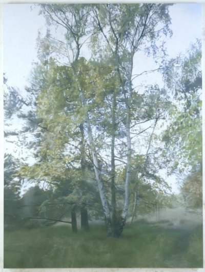 Image:  Birch 1 , 2004. Oil on linen, 220 x 165 cm.