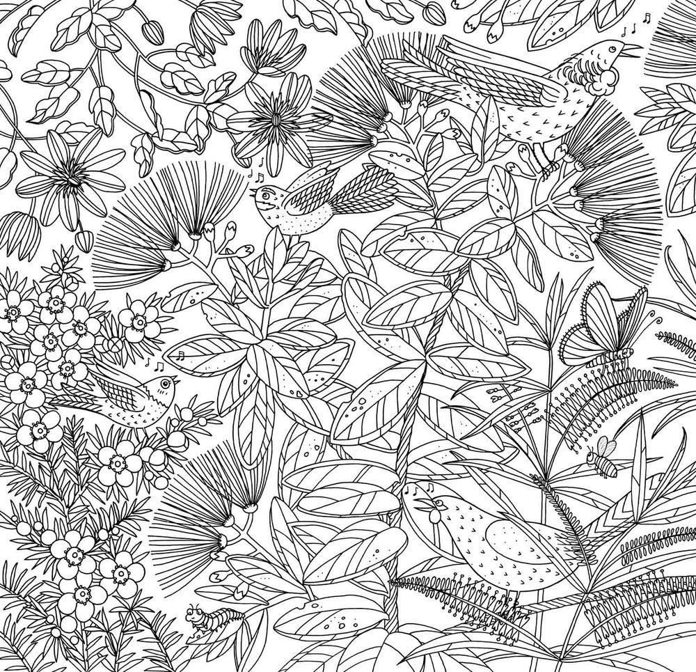 New Zealand Birds colouring page