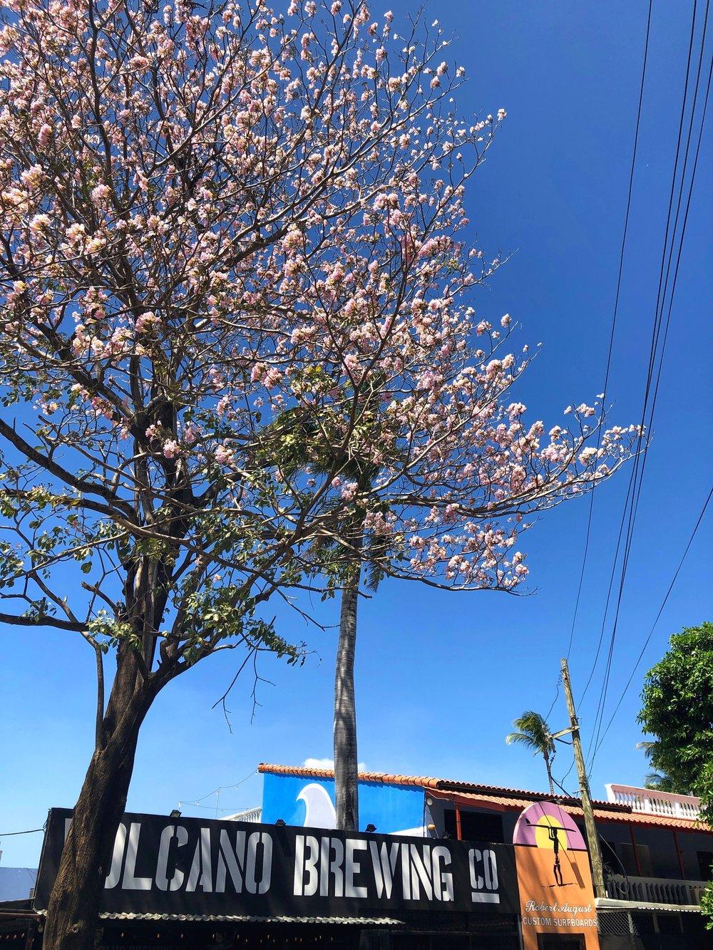 Main Street in Tamarindo