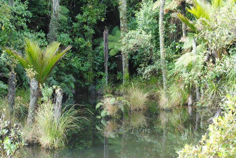 NZ south island Alex.jpg